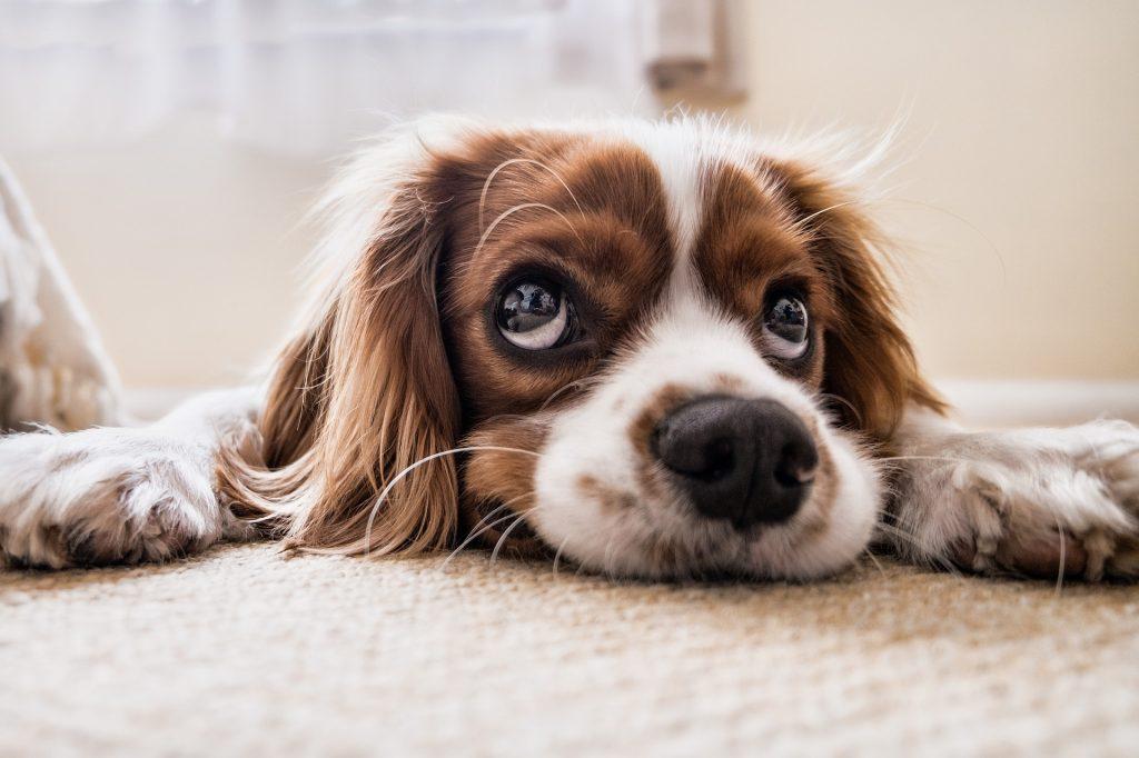 A Dogs Best Friend Is Human