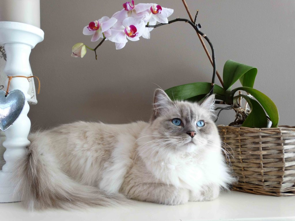 What Your Cat Breed Says About You